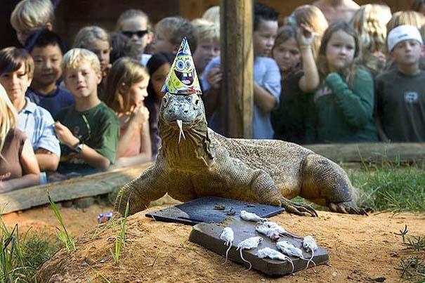 Ζώα που γιορτάζουν τα γενέθλια τους (7)