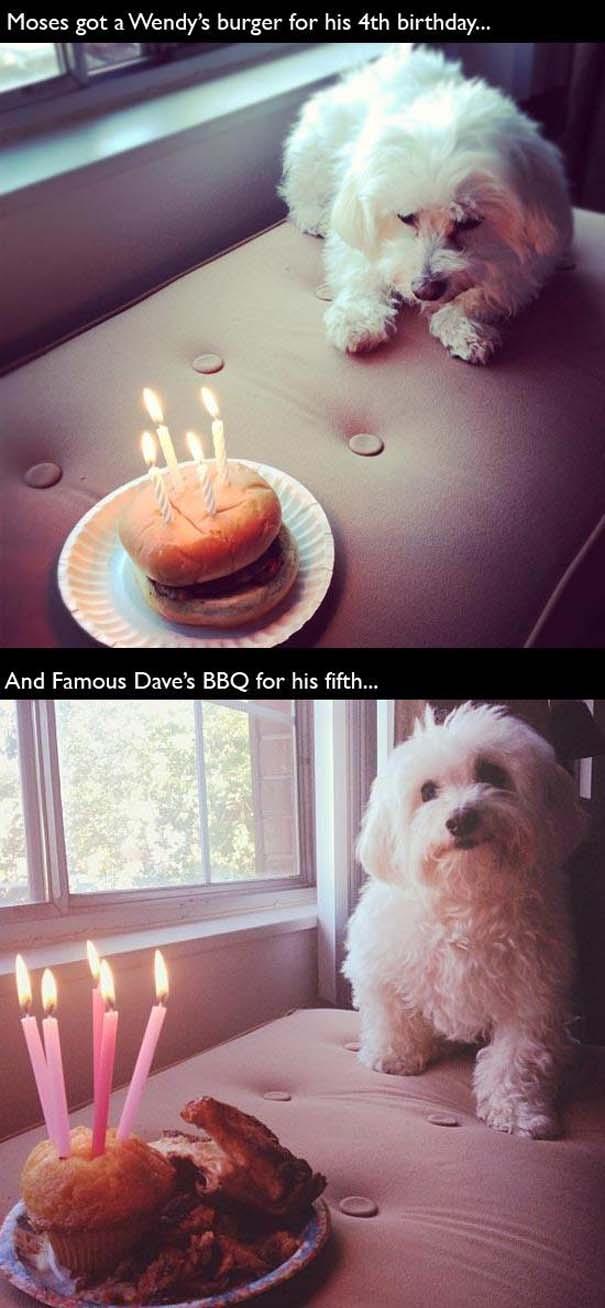 Ζώα που γιορτάζουν τα γενέθλια τους (9)
