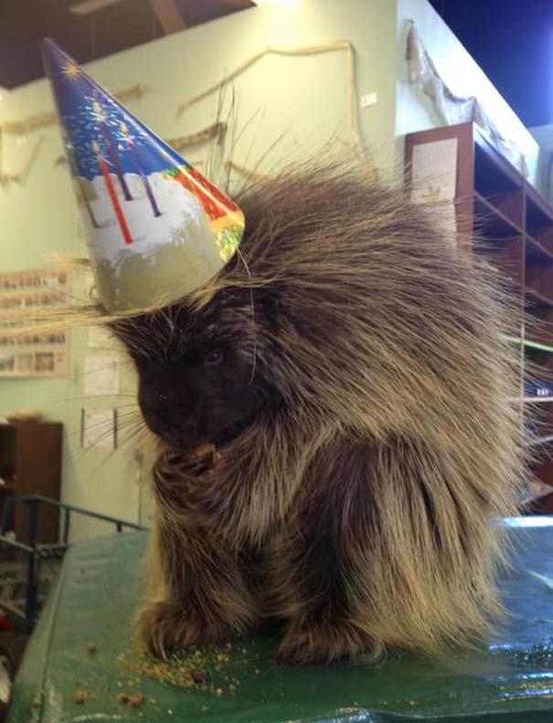 Ζώα που γιορτάζουν τα γενέθλια τους (11)