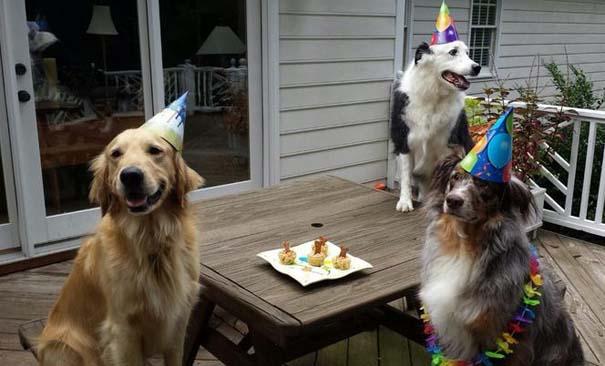 Ζώα που γιορτάζουν τα γενέθλια τους (12)