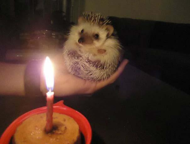 Ζώα που γιορτάζουν τα γενέθλια τους (14)