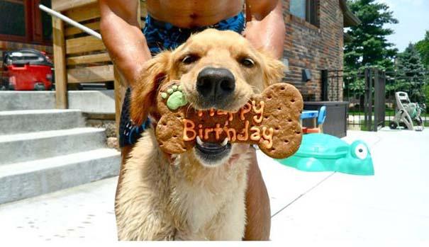 Ζώα που γιορτάζουν τα γενέθλια τους (15)