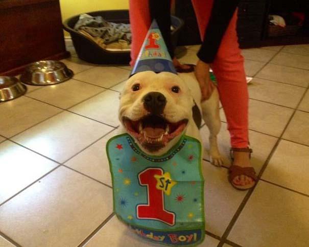 Ζώα που γιορτάζουν τα γενέθλια τους (17)