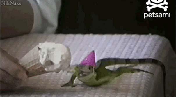 Ζώα που γιορτάζουν τα γενέθλια τους (19)