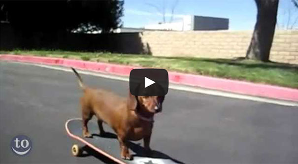 Ζώα που κάνουν skateboard