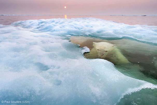Wildlife Photographer of the Year 2013 (11)