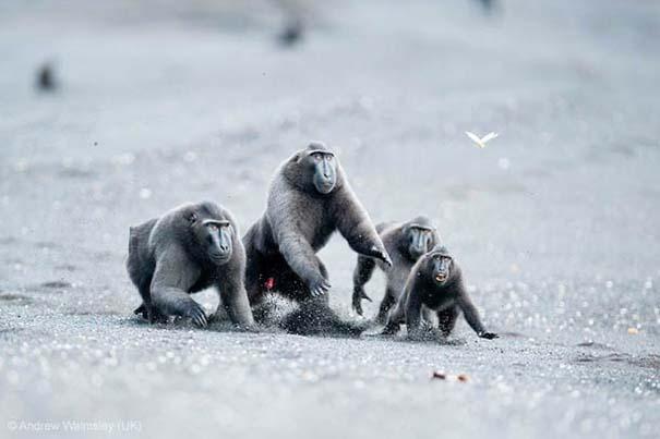Wildlife Photographer of the Year 2013 (9)
