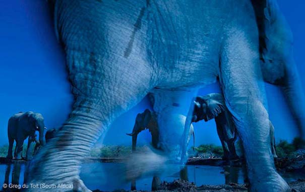 Wildlife Photographer of the Year 2013 (10)