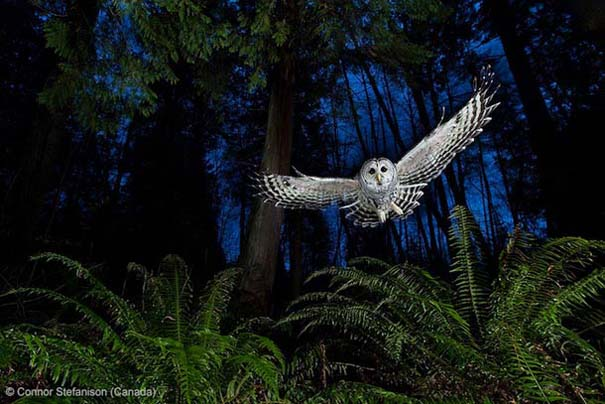 Wildlife Photographer of the Year 2013 (26)