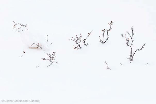 Wildlife Photographer of the Year 2013 (14)