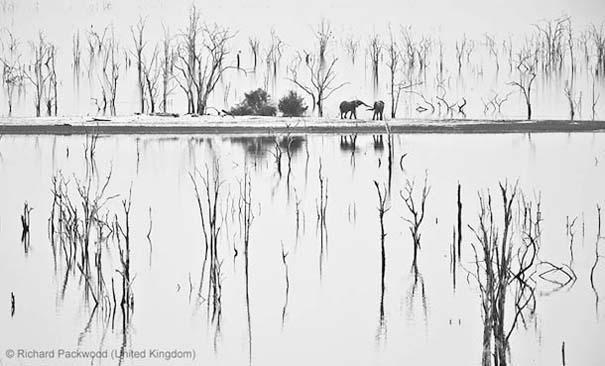 Wildlife Photographer of the Year 2013 (19)
