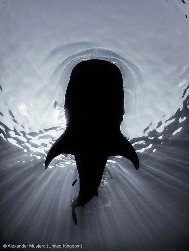 Wildlife Photographer of the Year 2013 (22)