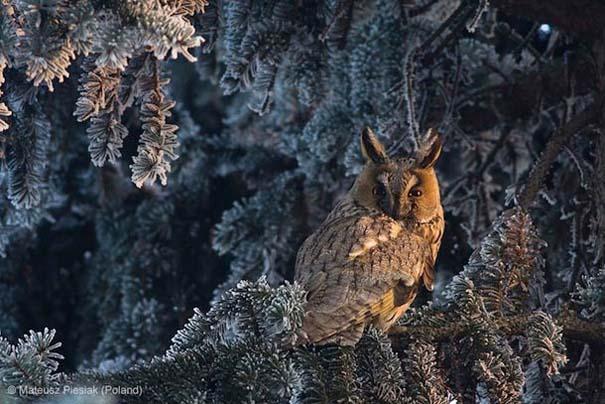 Wildlife Photographer of the Year 2013 (18)