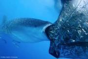 Wildlife Photographer of the Year 2013 (1)
