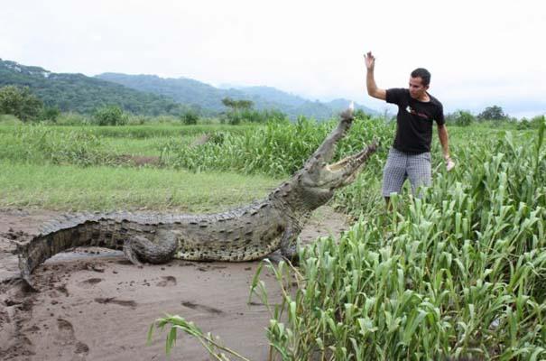 Ατρόμητος ξεναγός σε ποτάμι με κροκόδειλους (1)