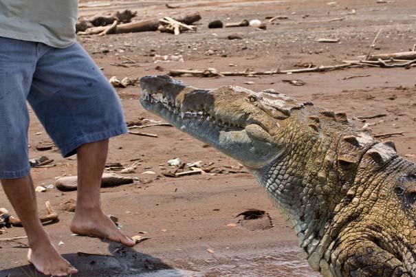 Ατρόμητος ξεναγός σε ποτάμι με κροκόδειλους (3)