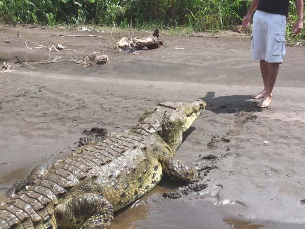 Ατρόμητος ξεναγός σε ποτάμι με κροκόδειλους (11)
