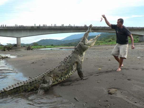 Ατρόμητος ξεναγός σε ποτάμι με κροκόδειλους (12)