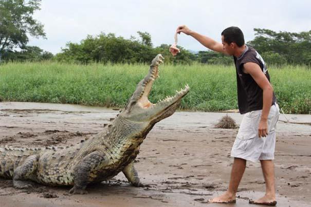 Ατρόμητος ξεναγός σε ποτάμι με κροκόδειλους (18)