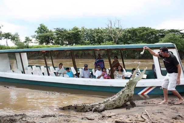 Ατρόμητος ξεναγός σε ποτάμι με κροκόδειλους (19)