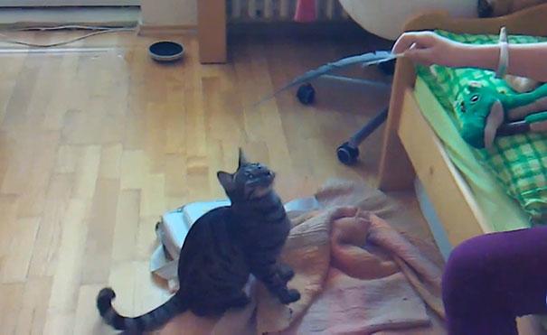 Οι πιο ατσούμπαλες γάτες του κόσμου