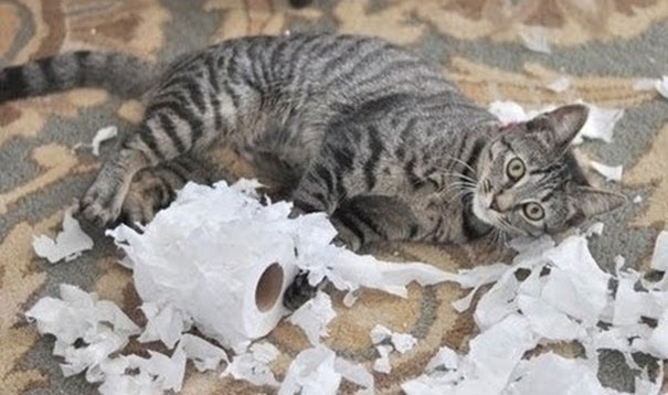 Ένοχες γάτες με απίθανες αντιδράσεις