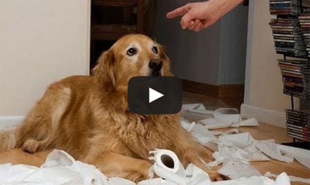 Ένοχοι σκύλοι απίθανες αντιδράσεις