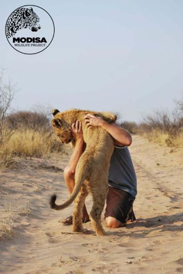 Ο φωτογράφος που έζησε με τα λιοντάρια στην Αφρική (2)