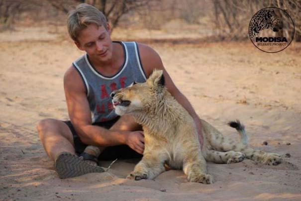 Ο φωτογράφος που έζησε με τα λιοντάρια στην Αφρική (3)