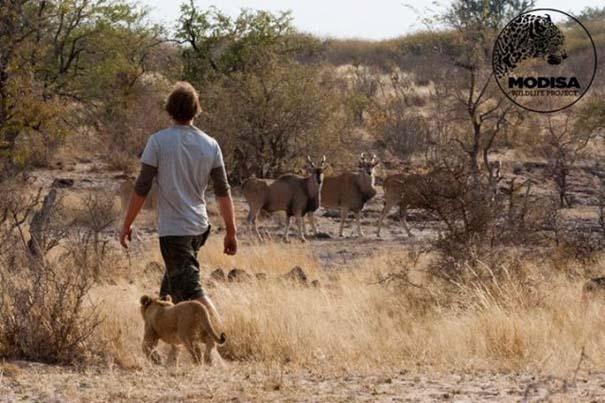 Ο φωτογράφος που έζησε με τα λιοντάρια στην Αφρική (6)
