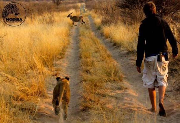 Ο φωτογράφος που έζησε με τα λιοντάρια στην Αφρική (8)