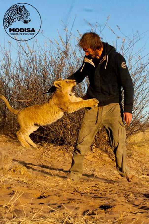Ο φωτογράφος που έζησε με τα λιοντάρια στην Αφρική (11)