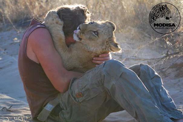 Ο φωτογράφος που έζησε με τα λιοντάρια στην Αφρική (12)