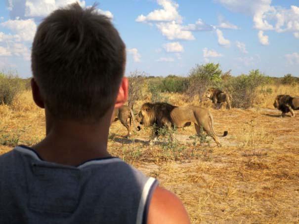 Ο φωτογράφος που έζησε με τα λιοντάρια στην Αφρική (16)
