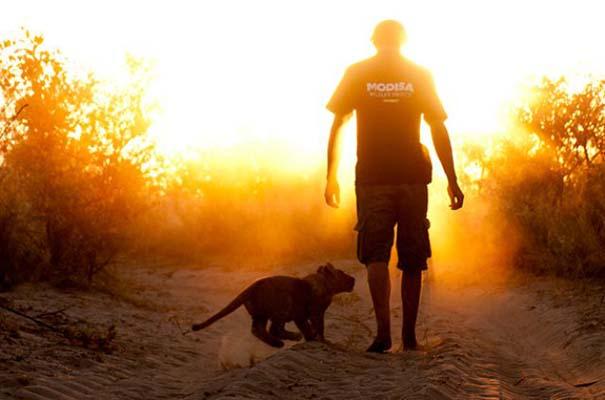 Ο φωτογράφος που έζησε με τα λιοντάρια στην Αφρική (17)