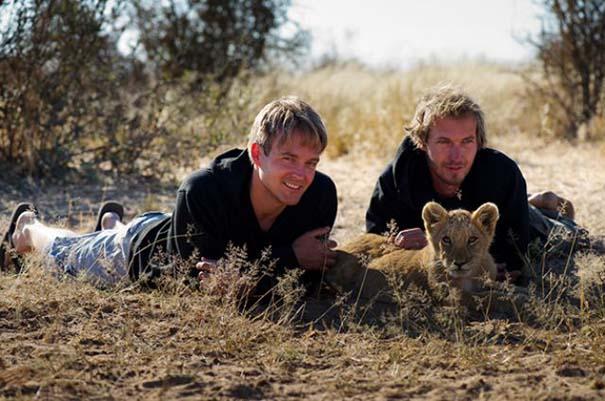 Ο φωτογράφος που έζησε με τα λιοντάρια στην Αφρική (18)