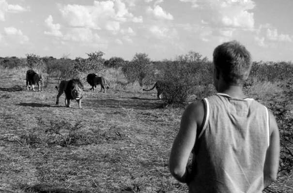 Ο φωτογράφος που έζησε με τα λιοντάρια στην Αφρική (21)