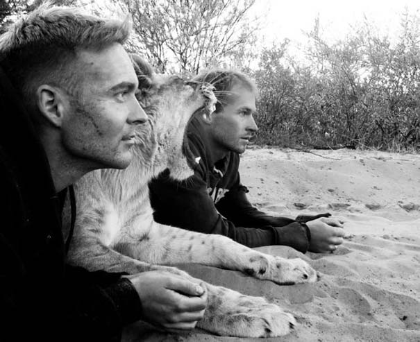 Ο φωτογράφος που έζησε με τα λιοντάρια στην Αφρική (24)
