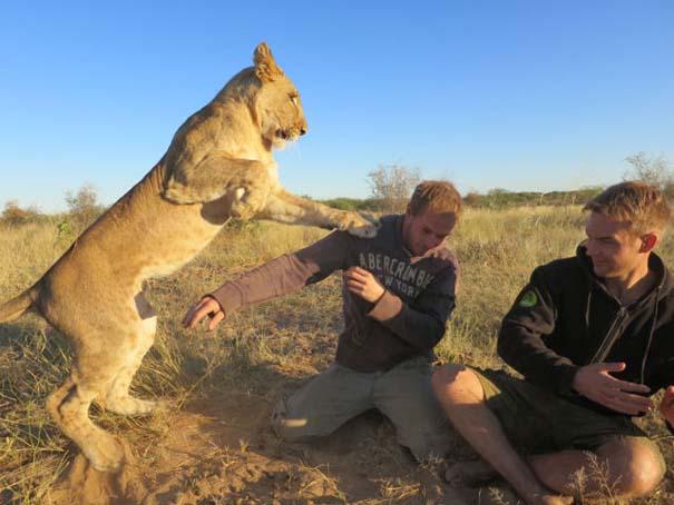Ο φωτογράφος που έζησε με τα λιοντάρια στην Αφρική (25)