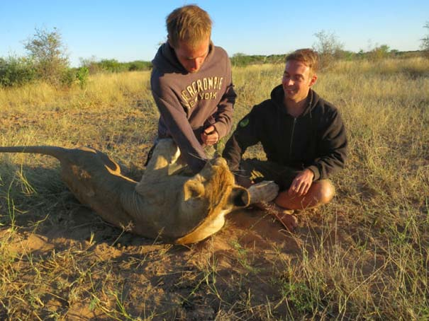 Ο φωτογράφος που έζησε με τα λιοντάρια στην Αφρική (26)