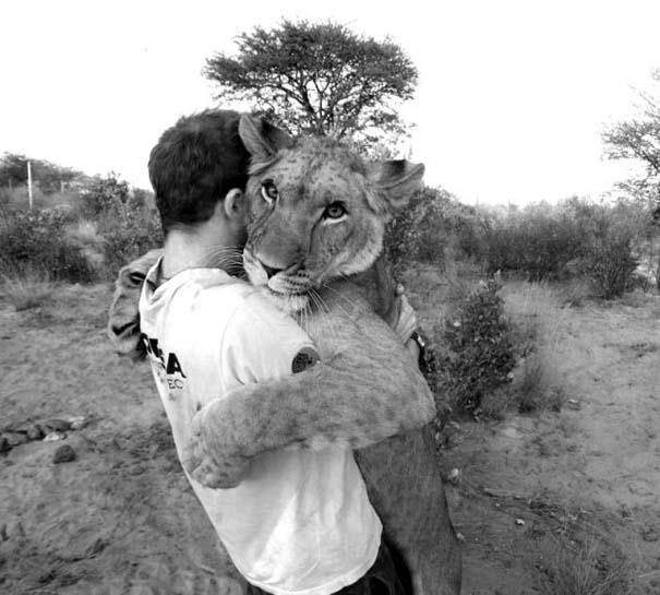 Ο φωτογράφος που έζησε με τα λιοντάρια στην Αφρική (30)