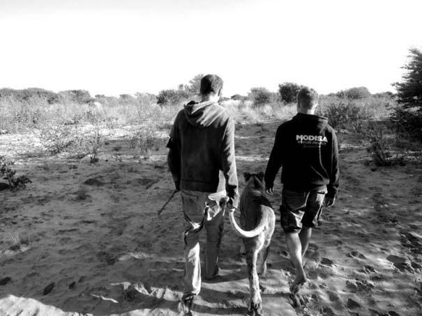 Ο φωτογράφος που έζησε με τα λιοντάρια στην Αφρική (33)