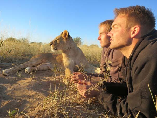 Ο φωτογράφος που έζησε με τα λιοντάρια στην Αφρική (36)