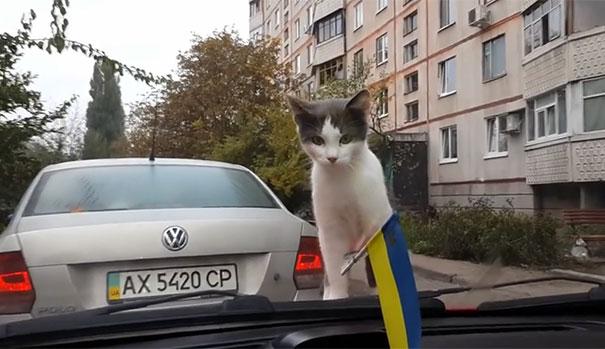 Γάτα προσπαθεί να αιφνιδιάσει υαλοκαθαριστήρες αυτοκινήτου...