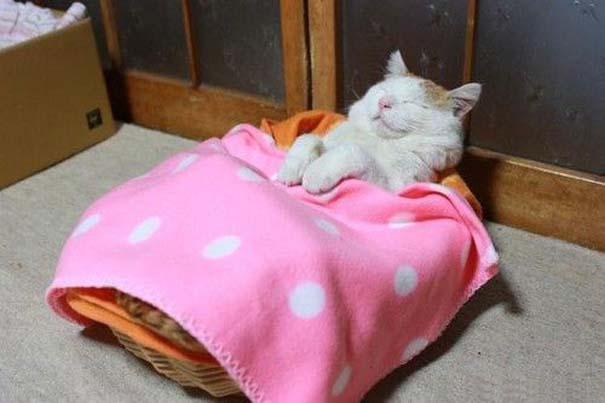 Γάτες που... κάνουν τα δικά τους! (7)
