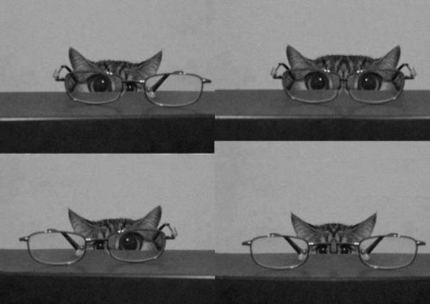 Γάτες που... κάνουν τα δικά τους! (15)