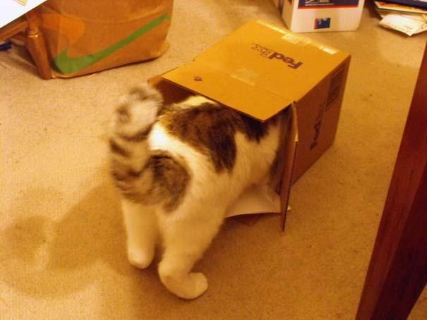 Γάτες που... κάνουν τα δικά τους! (18)