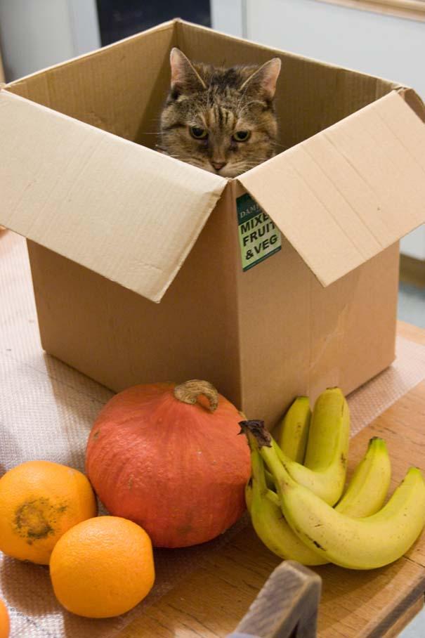Γάτες που... κάνουν τα δικά τους! (19)