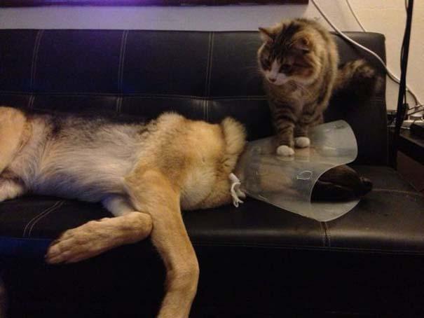 Γάτες που... κάνουν τα δικά τους!