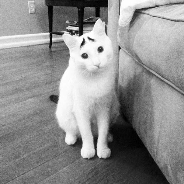 Γάτες που έγιναν διάσημες χάρη στα σημάδια της γούνας τους (2)